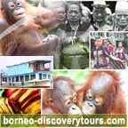 borneo discovery tours